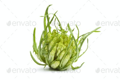 Fresh Puntarelle vegetable