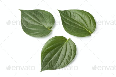 Piper betle leaves