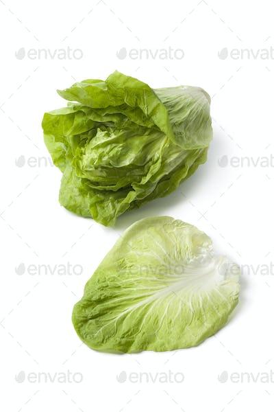 Sugarloaf vegetable