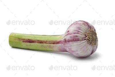 Fresh French garlic