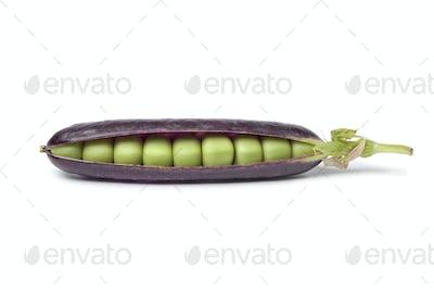 Fresh peas in purple pod