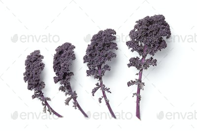 Leaves of red curly kale