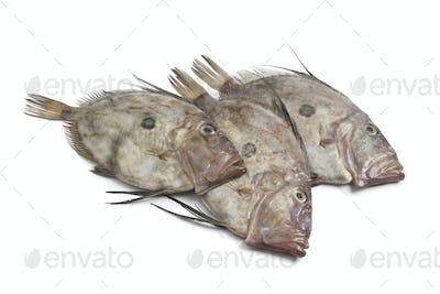 Fresh John Dory fishes