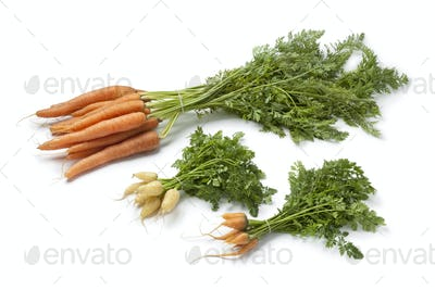 Fresh large and mini carrots