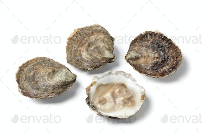 Open and closed European flat oysters