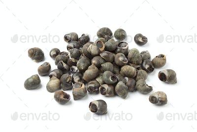 Fresh common periwinkles
