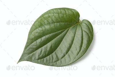 Piper betle leaf