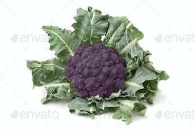 Fresh purple broccoli