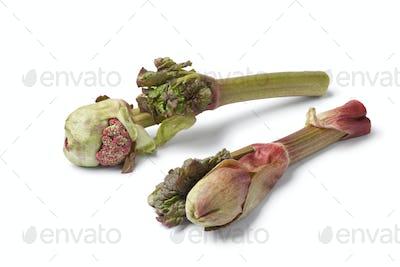 Fresh Rhubarb flowers