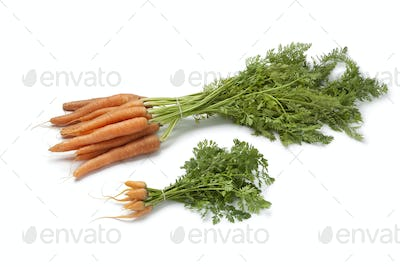 Fresh baby carrots  and large ones