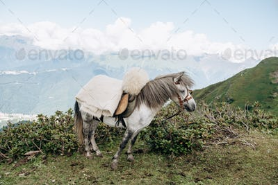 A horse awaits master in the mountains