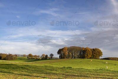 Landscape near Groesbeek