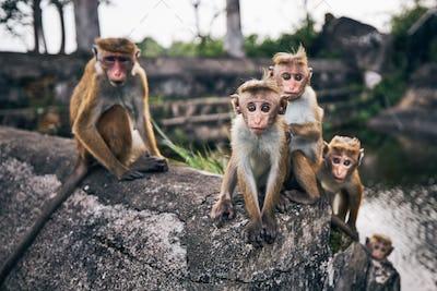Group of cute monkeys