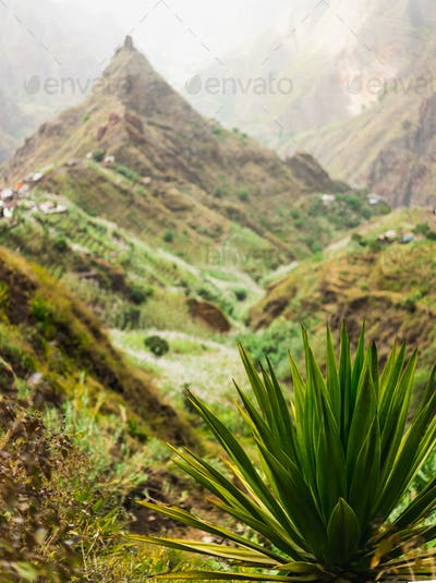 Agave plant with lombo de pico in Xo-xo valley in background. Trekking route 202 over Rabo Curto to