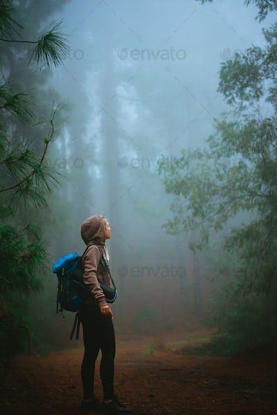 Female traveler wearing hood on the road in the mysterious foggy pine forest. Santo Antao Island