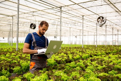 Caucasian worker noting something on the laptop in the salad plantation