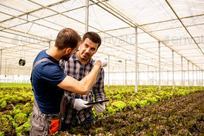 Two researchers discuss salad plants and gesticulate