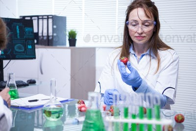 Middle age female doing Strawberry fruit research in laboratory