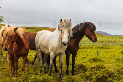 Icelandic horses grazing on field against sky