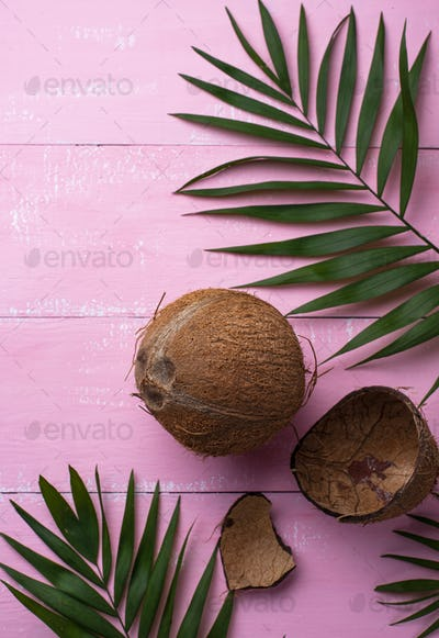 Coconuts and palm leaves on pink
