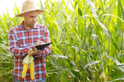 Farmer in straw hat with clipboard inspecting corn at field somewhere in Ukraine