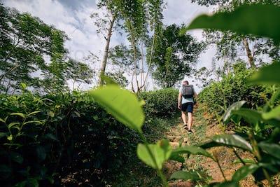 Traveler in tea plantation