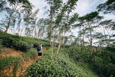 Traveler in tea plantation