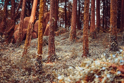 Detail of a wild forest in autumn