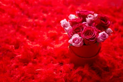 Pink roses packed in box and placed on red feathers background with copy space