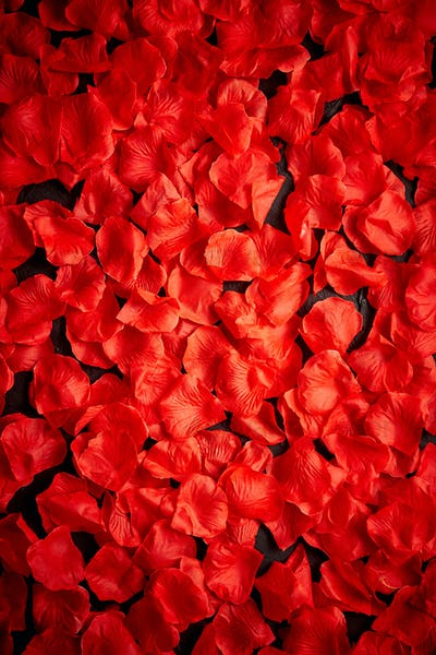 Background of beautiful red rose petals. Top view