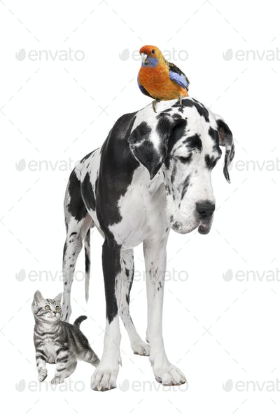 Group of pets : dog, bird, cat
