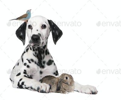 Group of pets : dog puppy, bird, rabbit