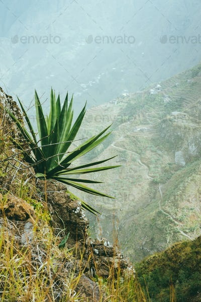 Agave on the mountain slope. Santo Antao Island, Cape Verde Cabo Verde