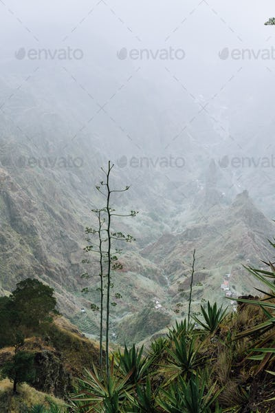 Cape Verde. Blossom yucca plants with desolate rocky mountaint background in Xo-xo valley in Santo