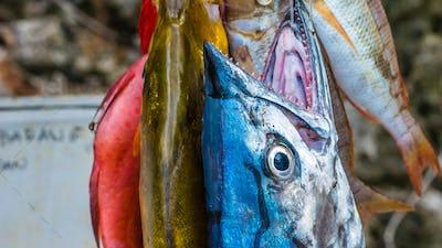 Fresh Fish to buy on Painemo Island, Raja Ampat, West Papua, Indonesia