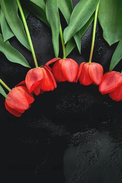 Fresh red tulips on black background. A bouquet of spring flowers, Beautiful greeting card.