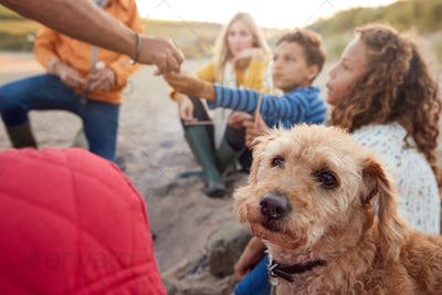 Pet Dog With Multi-Generation Family Toasting Marshmallows Around Fire On Winter Beach Vacation