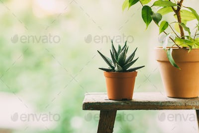 Home plants in pots outdoors