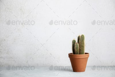 Close up of cactus in ceramic pot against white wall.