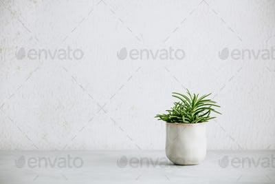 Close up of tiny succulent in trendy ceramic pot against white wall