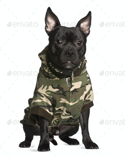 Crossbreed dog in camouflage, 1 year old, sitting in front of white background