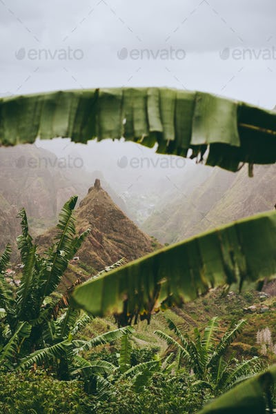 Mountain peak of Xo-xo valley visible throught the banana leaves frame down the valley. One of the