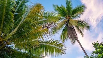 Coconat Palm on the Beach of Gam Island. Raja Ampat, Indonesia, West Papua