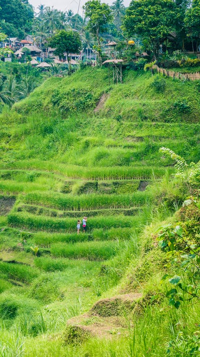 Tourist couple making photo from amazing tegalalang rice terrace cascades fields with beautiful