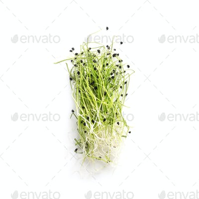Organically grown microgreens isolated on white background