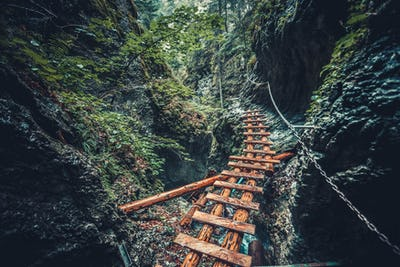 Abandoned old wooden bridge in jungle forest