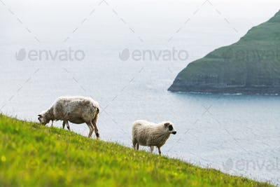Morning view on the summer Faroe islands