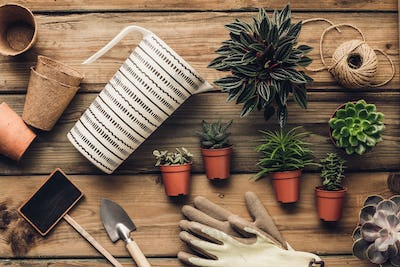 Collection of various succulent plants and garden tools on wooden background