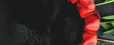 Banner with Fresh red tulips on black background. A bouquet of spring flowers, greeting card.