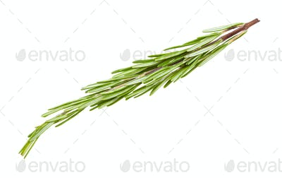 twig of fresh rosemary herb isolated on white